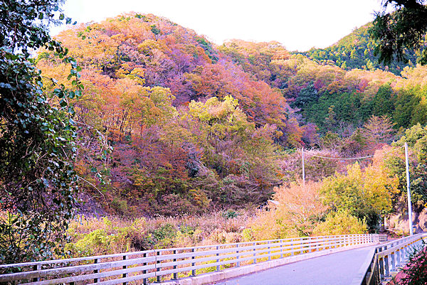 神奈川県県道76号線の紅葉