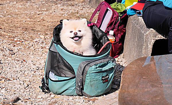20190224二上山 (11)雌岳山頂にいた犬