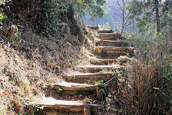 20190226二上山 (1)石切場から岩屋峠への登山道