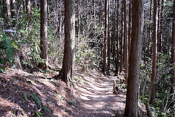 20190226二上山 (10)杉木立の登山道
