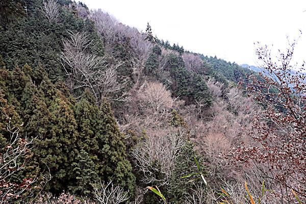 20190221二上山 (1)石切場から岩屋峠へ