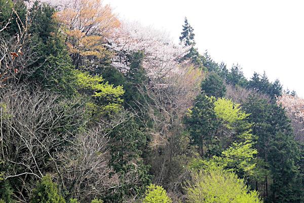 20190406二上山 (1)石切場から岩屋峠分岐まで